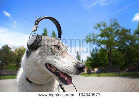 Dog in headphones in the park