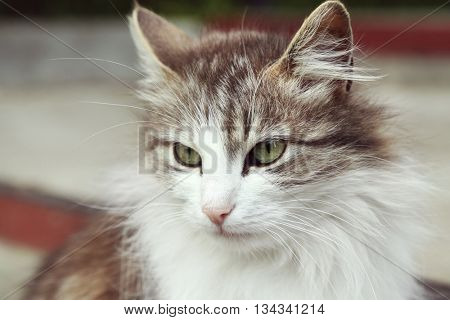 Underbred cute cat on street