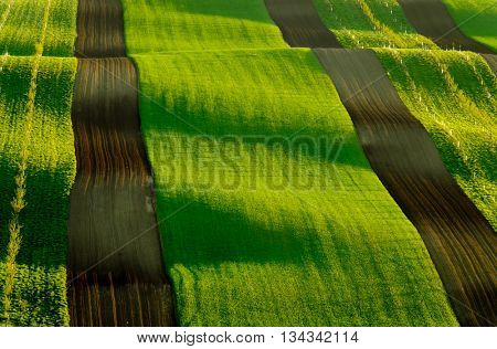 Green and yellow wavy hills in South Moravia, Czech Republic