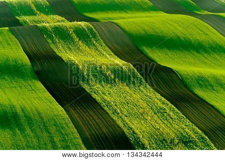 Green wavy hills in South Moravia, Czech Republic
