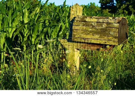 Rustic wooden mailbox next to a cornfield taken in the rural countryside