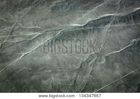 beautiful drawing monkey to the desert of Nazca