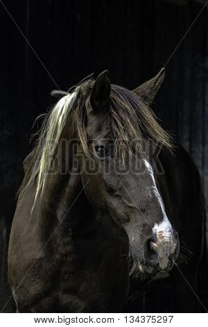 Brown and white gelding looking at the camera in vertical format