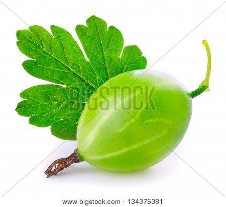Gooseberry isolated on white background. Green ripe gooseberry with leaf isolated on white background. Gooseberry closeup