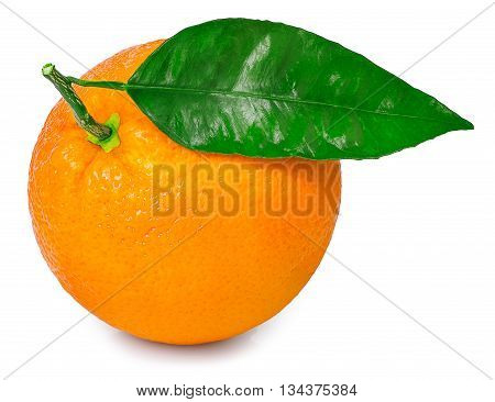 citrus fruit orange with leaf isolated on white background. Orange with leaf. Citrus orange isolated