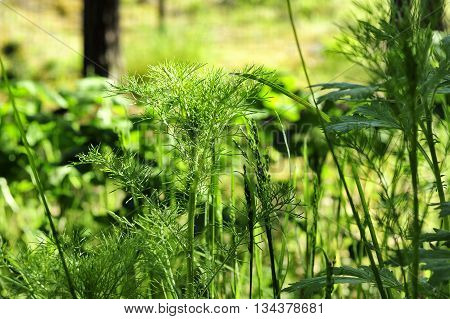 closeup summer green grass in the forest