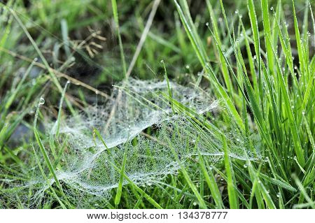 closeup small spider web in the grass