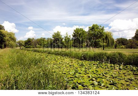 Landscape meadows and groove covered with thick leaves of water lilies in the park a beautiful sunny day and blue sky with soft white clouds. Horizontal view.