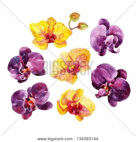 Watercolor Orchid flowers set. Orchid blooming elements isolated on white background. Exotic flowers. Hand painted watercolor illustration