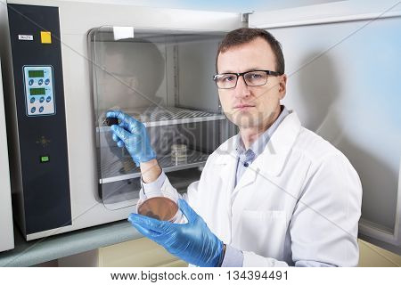 Microbiologist hand cultivating a petri dish whit inoculation loops beside autoclave for sterilising