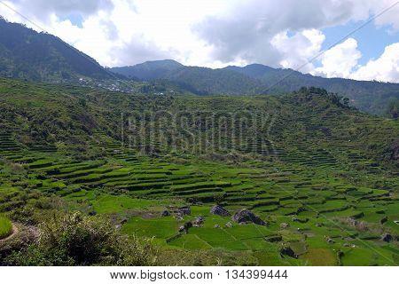 UNESCO Rice Terraces in Sagada, Luzon, the Philippines