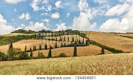 Tuscany Landscape panorama hills cypress and meadow Toscana - Italy
