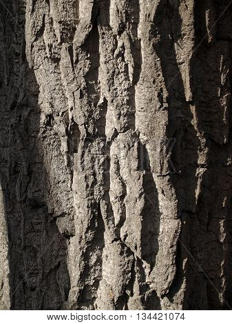 The beautiful wooden bark background with deep crancles