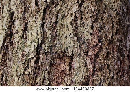 Macro Of An Eroded Conifer Bark With Holes