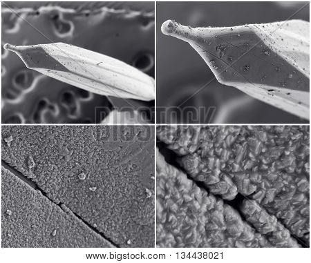 Scientific Collage. Photo From Electron Microscope