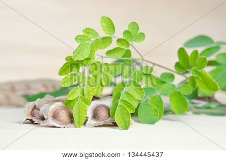 Moringa (Other names are Moringa oleifera Lam. MORINGACEAE Futaba kom hammer vegetable hum Moringa hum bug Moringa bug Hoo) leaf with seed on wooden board background