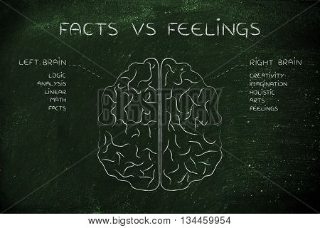 Left And Right Brain With Function Descriptions, Facts Vs Feelings