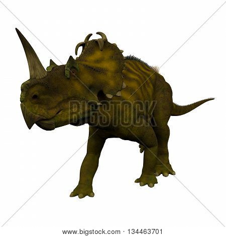 Centrosaurus Dinosaur on White 3D Illustration - Centrosaurus was a herbivorous ceratopsian dinosaur that lived in Canada during the Cretaceous Period.
