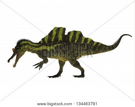 Ichthyovenator Side Profile 3D Illustration - Ichthyovenator was a theropod spinosaur dinosaur that lived in Laos Asia in the Cretaceous Period.
