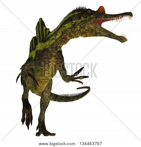 Ichthyovenator Dinosaur on White 3D Illustration - Ichthyovenator was a theropod spinosaur dinosaur that lived in Laos Asia in the Cretaceous Period.