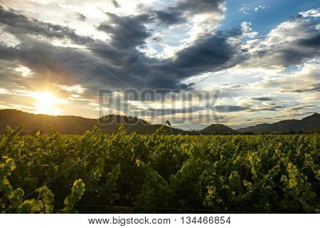 Sunset through clouds over a Napa Valley vineyard. Sunbeams shine down on a lush Napa vineyard at golden hour. Dramatic clouds at sunset. California mountains in the background.