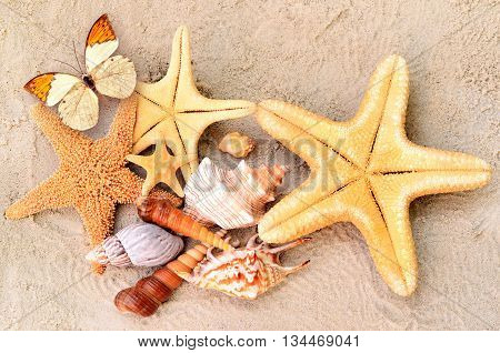 A lot of seashells, starfish and butterfly on sand. Exotic concept. Summer beach.