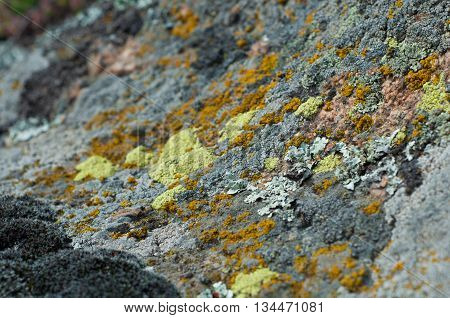 granite stones with different types of lichen and moss close up