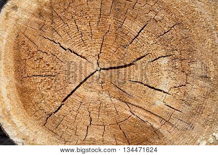 macro detail light brown timber material structure