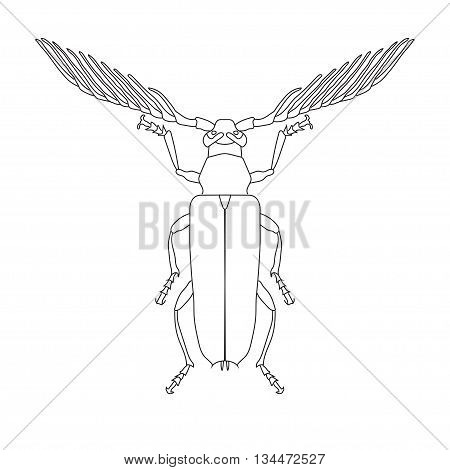 Skalbaggar beetle Cyriopalus wallacei. Sketch of Skalbaggar beetle. Skalbaggar beetle isolated on white background. hand-drawn Skalbaggar beetle. Vector illustration