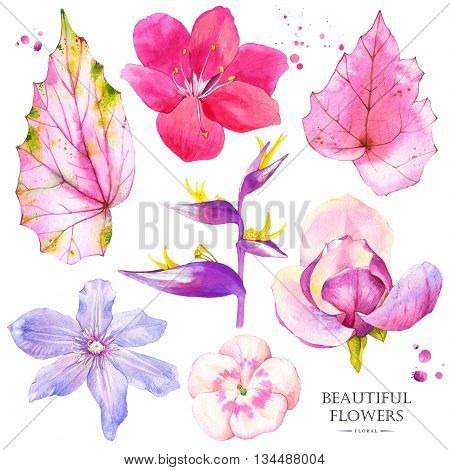 Watercolor collection of pink lily, magnolia, strelitzia, begonia, geranium and clematis. Handmade painting on a white background.