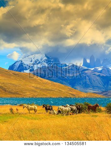 Magic light of sunset.  Rocks Torres del Paine visible among the clouds. Herd of mustangs on the shore of Laguna Azul