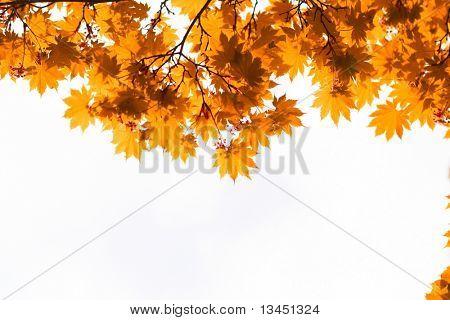 Autumn, yellow leaves