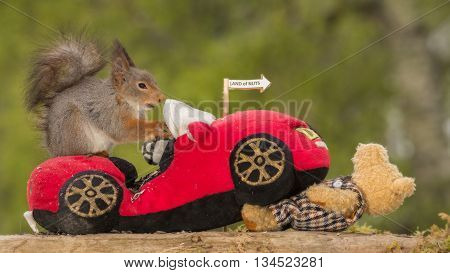 red squirrel on a car driving over a bear