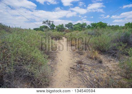 Brush Beside Desert Hiking Trail