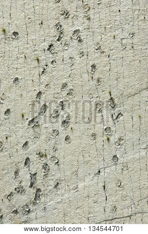 Dinosaur Tracks On The Wall Of  Cal Orko, Sucre, Bolivia