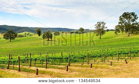 Picturesque wine valley in Barossa South Australia. Color-toning effect appplied