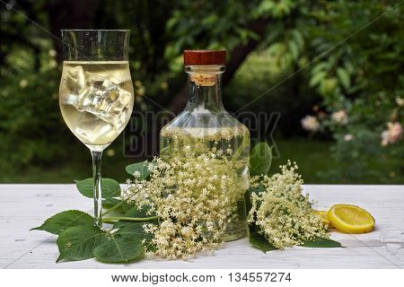 elderflower drink hugo a refreshing prosecco cocktail with ice cubes in a glass blossoms lemon slices and a bottle with syrup on a white table in the garden selective focus narrow depth of field