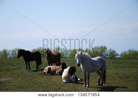 Group of horses in a pastureland at spring