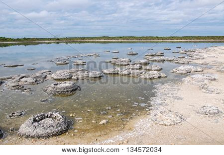 Stromatolites in the Lake Thetis landscape with sand, native flora and water reflections under an overcast sky in Western Australia.