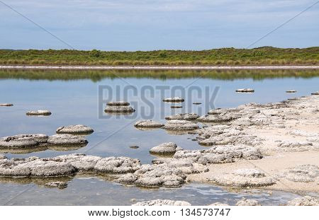 Stromatolites, living marine fossils, in the Lake Thetis landscape with sand under an overcast sky in Western Australia. poster