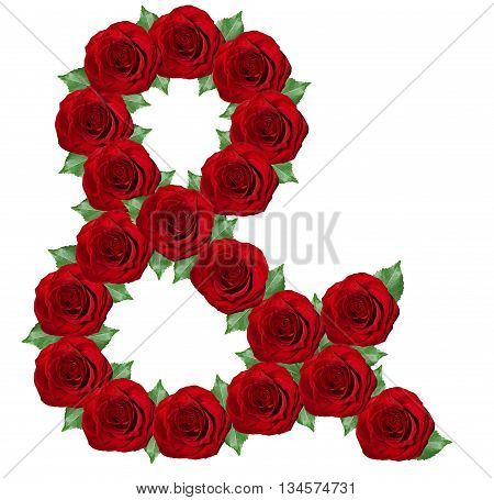 Ampersand Symbol  Made From Red Roses
