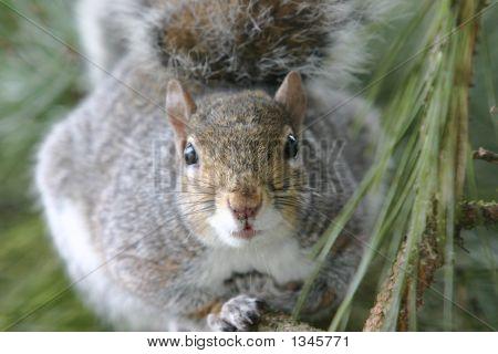 Squirrels Eye View