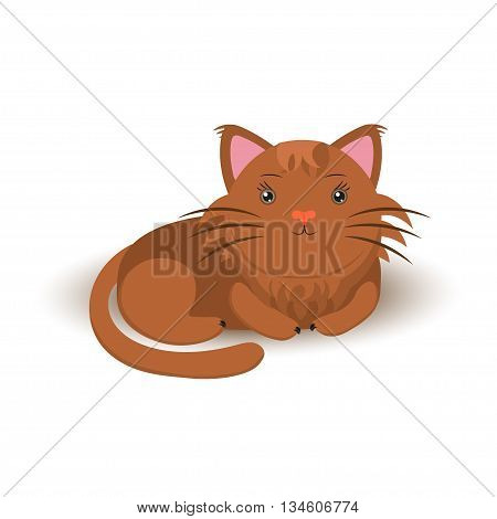 Cute furry cat sitting alone on white background.