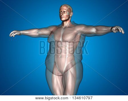 Concept conceptual 3D illustration human anatomy muscle text, blue gradient background, metaphor to body, tendon, fit, builder, strong, biological, skinless, shape, muscular, posture, health medical