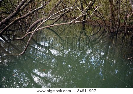 Tree branches reflected in the muddy river's surface