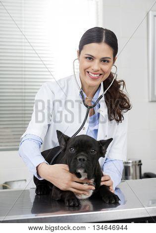 Female Vet Examining French Bulldog With Stethoscope On Bed