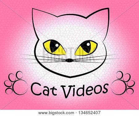 Cat Videos Indicates Audio Visual And Feline