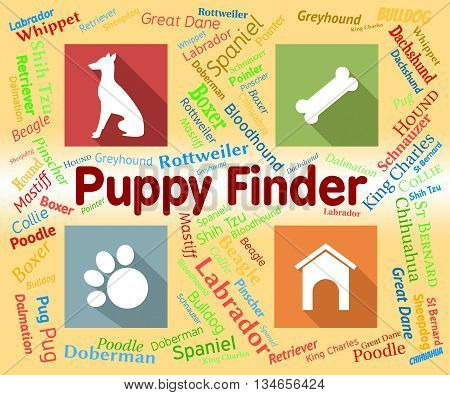 Puppy Finder Shows Search Out And Choose