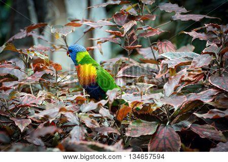 Beautiful color parrot in a natural habitat