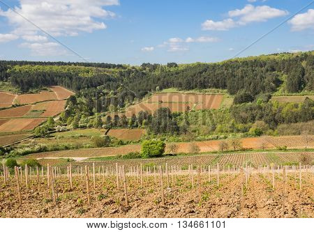 Vineyards on the wooded hillsides in Burgundy, France